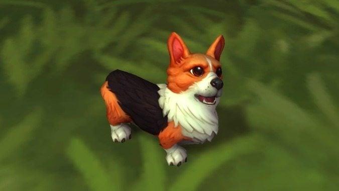 wow-12th-anniversary-corgi-pup-pet-header