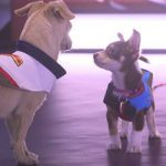 Overwatch esports goes to the dogs with today's Puppy Rumble