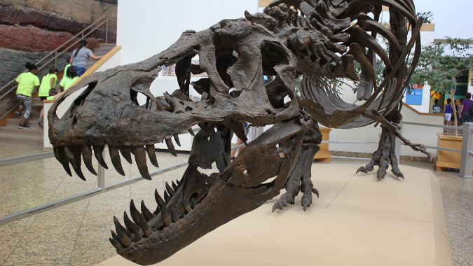 Why I M Sad To See Stan The Famous T Rex Specimen Sell To A Private Collector For 31 8 Million